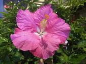 我家花園的花卉:20200309_181427-uid-7E3CA1E2-0427-4060-BEBA-8267290DDBCD.jpeg