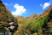 日本四國人文藝術+楓紅深度之旅-別府峽楓葉散策53-23:A81Q0067.JPG