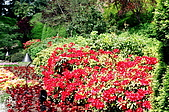 阿拉斯加''愛之船''之旅-布查花園驚艷:93710002.jpg