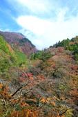 日本四國人文藝術+楓紅深度之旅-別府峽楓葉散策53-23:A81Q0039.JPG