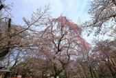 日本關西賞櫻深度之旅-平野神社- 42-22:A81Q2088.JPG
