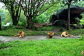 15-5-峇里島-Safari Marine Park野生動物園:IMG_1255峇里島-Safari Marine Park野生動物園.jpg