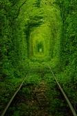 世界絕美樹隧道:2-烏克蘭 愛的隧道.jpg