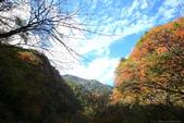 日本四國人文藝術+楓紅深度之旅-別府峽楓葉散策53-23:A81Q0055.JPG