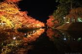 日本北關東東北行-8弘前城-櫻花紅葉園區驚豔楓紅.....:A81Q0687.JPG