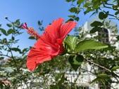 我家花園的花卉:20200315_132904-uid-274DC34F-5B20-4BFD-A1E1-0C2ACC46F62B.jpeg
