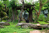 15-5-峇里島-Safari Marine Park野生動物園:IMG_1111峇里島-Safari Marine Park野生動物園.jpg