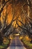 世界絕美樹隧道:4-英國 黑暗樹籬.jpg