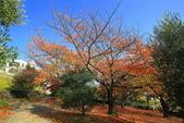 日本四國人文藝術+楓紅深度之旅-小豆島橄欖公園53-36:A81Q0319.JPG