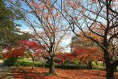 日本四國人文藝術+楓紅深度之旅-小豆島橄欖公園53-36:A81Q0323.JPG