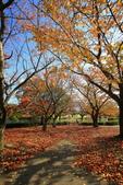 日本四國人文藝術+楓紅深度之旅-小豆島橄欖公園53-36:A81Q0322.JPG