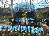 日本關西賞櫻深度之旅-鳥取花迴廊42-8:IMG_2394.JPG
