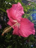 我家花園的花卉:20200309_181401-uid-3C7BA937-CECE-417E-B728-E743273A3D9F.jpeg