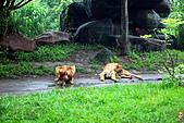 15-5-峇里島-Safari Marine Park野生動物園:IMG_1256峇里島-Safari Marine Park野生動物園.jpg