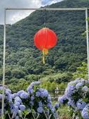 繡球花綻開在陽明山頂湖園區:20200604_133132-uid-46AD7B8D-231D-4966-872C-7E3DAEFDE92F.jpeg