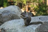 美國國家公園31天之旅紀實隨手拍搶先分享-2+好文章 :IMG_1054優勝美地國家公園瀑布下方YOSEMITE NATIONAL PARK_UNESCO世界遺產.JPG