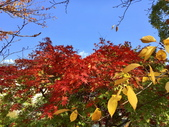 日本四國人文藝術+楓紅深度之旅-小豆島橄欖公園53-36:IMG_6866.JPG