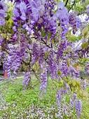 紫藤咖啡園-淡水二店:20210322_133332-uid-F72577C0-A908-4A84-B77B-9E171FE06D11-11144116.jpg