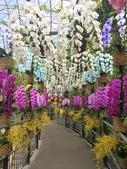 日本關西賞櫻深度之旅-鳥取花迴廊42-8:IMG_2372.JPG