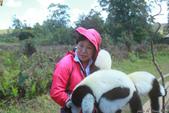 美女們被狐猴溫馨親切有禮的親親_在馬達加斯加-狐猴島Lemur Island:IMG_0360.jpg