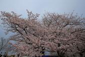 日本九州春櫻尊爵全覽之旅-1_福岡市舞鶴公園-綻放春櫻:A81Q5731.JPG