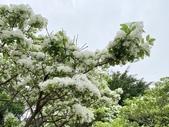 杜鵑花展在大安森林公園:20210304_152614-uid-1C25B2E6-C974-40F4-B92F-7E59C549280D-10283208.jpg