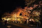 日本北關東東北行-8弘前城-櫻花紅葉園區驚豔楓紅.....:A81Q0701.JPG
