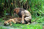 15-5-峇里島-Safari Marine Park野生動物園:IMG_1233峇里島-Safari Marine Park野生動物園.jpg