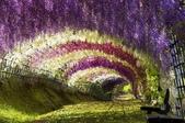 世界絕美樹隧道:9-日本紫藤隧道.jpg