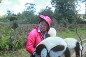 美女們被狐猴溫馨親切有禮的親親_在馬達加斯加-狐猴島Lemur Island:IMG_0361.jpg