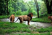 15-5-峇里島-Safari Marine Park野生動物園:IMG_1258峇里島-Safari Marine Park野生動物園.jpg