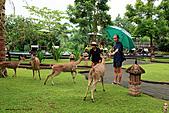 15-5-峇里島-Safari Marine Park野生動物園:IMG_1278峇里島-Safari Marine Park野生動物園.jpg