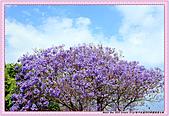 11-希臘-克里特島Crete-哈尼亞灣Hania:希臘-克里特島Crete-哈尼亞灣HaniaIMG_5680.jpg