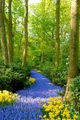 神奇美麗的路徑 ~ amazing paths:ATT0009615.jpg