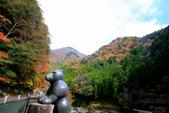 日本四國人文藝術+楓紅深度之旅-別府峽楓葉散策53-23:A81Q0030.JPG
