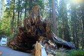 美國國家公園31天之旅紀實隨手拍搶先分享-2+好文章 :IMG_1401美國神木(美洲杉)國家公園SEQUOIA NATIONAL PARK.JPG