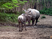 15-5-峇里島-Safari Marine Park野生動物園:IMG_6561峇里島-Safari Marine Park野生動物園.jpg