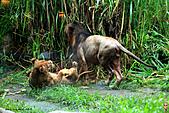 15-5-峇里島-Safari Marine Park野生動物園:IMG_1234峇里島-Safari Marine Park野生動物園.jpg