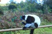美女們被狐猴溫馨親切有禮的親親_在馬達加斯加-狐猴島Lemur Island:IMG_0352.jpg