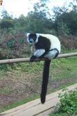 美女們被狐猴溫馨親切有禮的親親_在馬達加斯加-狐猴島Lemur Island:IMG_0353.jpg