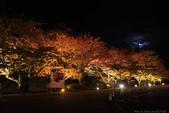 日本北關東東北行-8弘前城-櫻花紅葉園區驚豔楓紅.....:A81Q0699.JPG