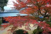 日本四國人文藝術+楓紅深度之旅-金刀比羅宮楓紅盛開秘境 53-33:A81Q0256.JPG