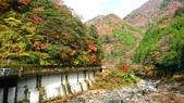 日本四國人文藝術+楓紅深度之旅-別府峽楓葉散策53-23:IMG_6216.JPG