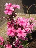 塞爾維亞SERBIA_貝爾格勒BELGRADE采風:DSC01268塞爾維亞_貝爾格勒BELGRADE_花卉.jpg