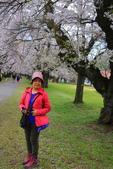 日本12天賞紫藤....VIP團之旅34-17 百年老欉櫻花在牧場內飄飄櫻吹雪...:A81Q6803.JPG