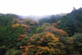 日本四國人文藝術+楓紅深度之旅-別府峽楓葉散策53-23:A81Q0012.JPG