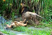 15-5-峇里島-Safari Marine Park野生動物園:IMG_1235峇里島-Safari Marine Park野生動物園.jpg