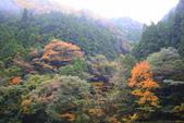 日本四國人文藝術+楓紅深度之旅-別府峽楓葉散策53-23:A81Q0009.JPG
