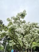 杜鵑花展在大安森林公園:20210304_152943-uid-2D908BC2-9B4C-4F64-8CB0-613CE8BB6ABA-9461678.jpg