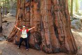 美國國家公園31天之旅紀實隨手拍搶先分享-2+好文章 :IMG_1440美國神木(美洲杉)國家公園SEQUOIA NATIONAL PARK.JPG